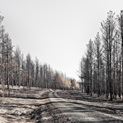 JNP_Burnt_Forest-311_06