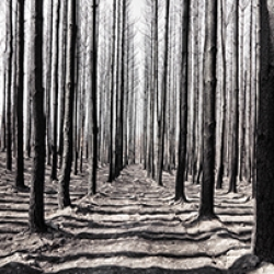 JNP_Burnt_Forest-171_05