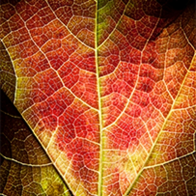 James Newman personal series 'Leaves'